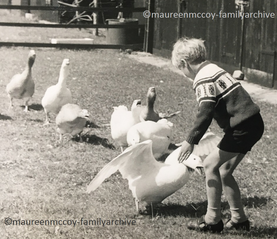 Kerry+Geese